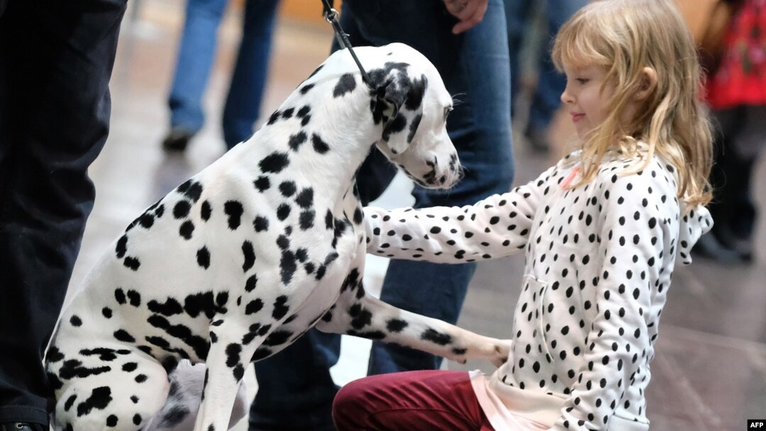New Study Suggests Dogs May Be Smarter than Cats