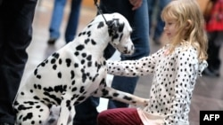 "A young visitor greets a dalmatian during the ""World Dog Show"" dog fair in Leipzig, eastern Germany, on November 8, 2017."