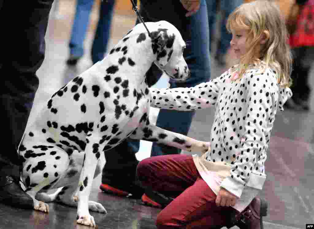 "A young visitor greets a dalmatian during the ""World Dog Show"" dog fair in Leipzig, Germany, Nov. 8, 2017."
