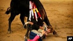 Roman, un torero espagnol, saisit la corne d'un taureau de ranch, Guadaira, auquel il a donné une stocade lors de la foire de San Isidro à Madrid, Espagne, 26 mai 2014.