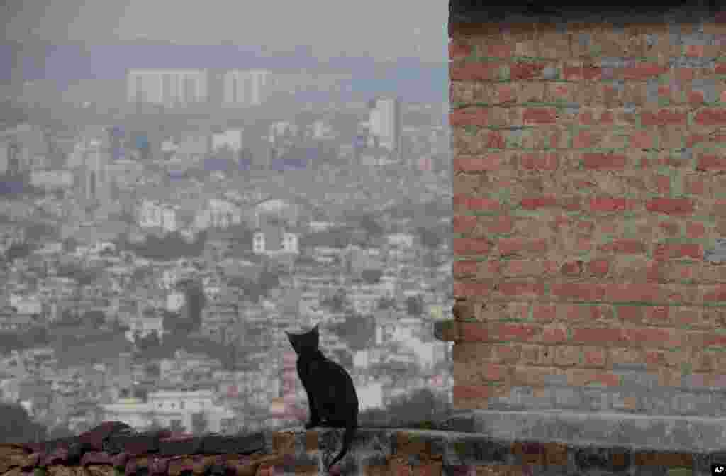 A cat sits on the balcony of a house during lockdown to control the spread of the new coronavirus in Kathmandu, Nepal.
