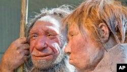 """FILE - The March 20, 2009 file photo shows the prehistoric Neanderthal man """"N"""", left, as he is visited for the first time by another reconstruction of a homo neanderthalensis called """"Wilma"""", right, at the Neanderthal museum in Mettmann, Germany."""
