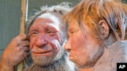"FILE - The March 20, 2009 file photo shows the prehistoric Neanderthal man ""N, left, as he is visited for the first time by another reconstruction of a homo neanderthalensis called ""Wilma"", right, at the Neanderthal museum in Mettmann, Germany."