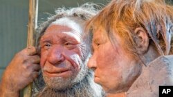 """FILE - Prehistoric Neanderthal man (L) visits for the first time another reconstruction of a homo neanderthalensis called """"Wilma"""" (R), at the Neanderthal museum in Mettmann, Germany."""