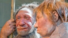 Scientists at Germany's Max Planck Institute have released a final version of a high-quality sequencing of a Neanderthal genome.