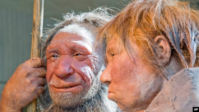 "FILE - The March 20, 2009 file photo shows the prehistoric Neanderthal man ""N"", left, as he is visited for the first time by another reconstruction of a homo neanderthalensis called ""Wilma"", right, at the Neanderthal museum in Mettmann, Germany."