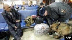 Cảnh sát dùng chó nghiệp vụ để kiểm tra hành lý hành khách sau vụ nổ bom phi trường Domodedovo