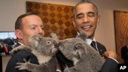 大利亚总理阿博特在参加G20峰会之余抱着树熊。(2014年11月15日)
