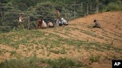 지난 2017년 6월 평양 인근 도로변 농장에서 주민들이 밭에 씨를 뿌리고 있다.