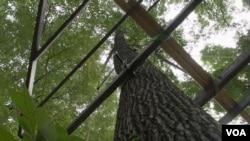 刚放置完成的树屋底座