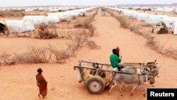 FILE - A Somali refugee drives his donkeys at Kobe refugee camp, 60km (37 miles) from Dolo Ado, near the Ethiopia-Somalia border.