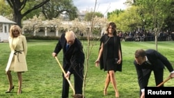 صدر ٹرمپ اور فرانس کے صدر میکرون وائٹ ہاؤس میں درخت لگا رہے ہیں (فائل فوٹو)