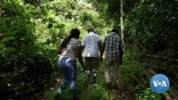 Ghana's Private Forest Project Brings Business to Reforestation