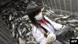 Повышенная радиация обнаружена в Японии в пищевых водорослях