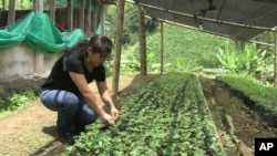 Farmer tending plants in Colombia