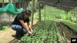 Farmer tending plants in Colombia