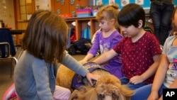 宠物狗和儿童一起玩耍