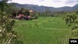 UU perlindungan lahan pertanian yang baru saja keluar dinilai sangat terlambat dalam melindungi kawasan pertanian di Indonesia.