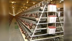 New, Fatal Bird Flu Strain Closely Monitored