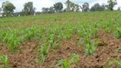 PRODESI criticado por agricultores de Benguela - 2:47