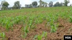 Ministério do Interior lança projectos para produção agrícola nas cadeias