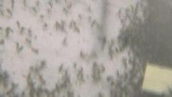 Komarci najveća pretnja