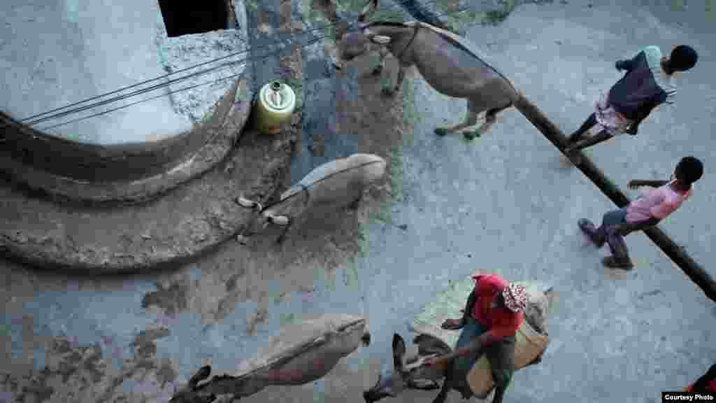 زندگی مردم لامو کمابیش همانی است که صدها سال پیش بود؛ به جای اتوموبیل هنوز از چهارپایان برای حمل و نقل استفاده میشود.