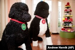 Replicas of Bo and Sunny are displayed in the East Wing Hallway of the White House during a preview of the 2016 holiday decor at the White House.