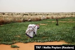 A woman works in a melon patch in the commune of Dar El Barka, Mauritania, Oct. 20, 2018.