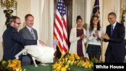 Perzidaanti Obaamaa fi maatiitti Turkey, White Housetitti dhiifama argattee qalma irra oolche