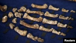 "Fossils of a newly discovered ancient species, named ""Homo naledi,"" are pictured during their unveiling outside Johannesburg, Sept. 10, 2015."