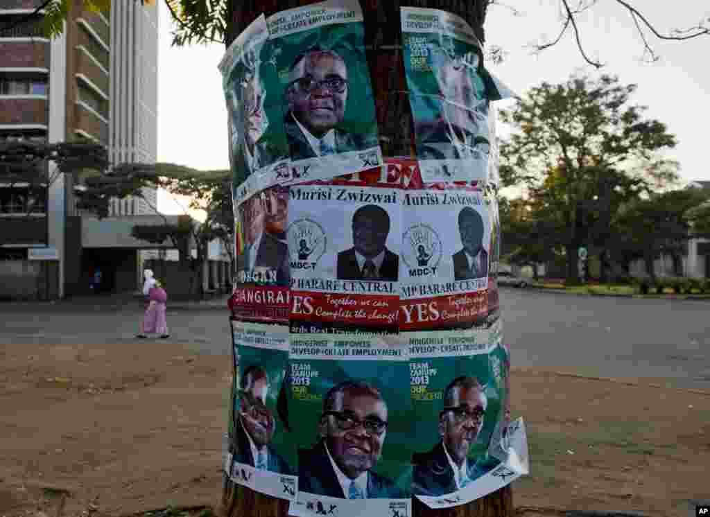 Election posters in support of Zimbabwean president Robert Mugabe, top and bottom, and Morgan Tsvangirai, prime minister and leader of the Movement for Democratic Change (MDC) center left, and MDC legislator Murisi Zwizwai, center, on a tree on the eve of elections in Zimbabwe on July 30, 2013.