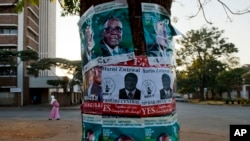 Election posters in support of Zimabwean president Robert Mugabe (top) and Prime Minister Morgan Tsvangirai (center left) and MDC legislator Murisi Zwizwai (center) on a tree on the eve of Zimbabwe's national elections, July 30, 2013, in Harare.