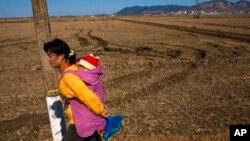 Một phụ nữ Triều Tiên cõng con đi ngang cánh đồng lúa gần Suriwon. Triều Tiên đã phải vật lộn với tình trạng thiếu lương thực kinh niên trong nhiều thập niên.