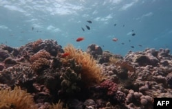An undated handout photo received from the ARC Centre of Excellence Coral Reef Studies on October 14, 2020 shows a damaged part of the Great Barrier Reef - the vast World Heritage-listed reef off Australia's northeastern coast.