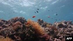 Bagian Great Barrier Reef, terumbu karang luas di lepas pantai timur laut Australia, yang rusak, 14 Oktober 2020. (Photo by Andreas DIETZEL / ARC Centre of Excellence for Coral Reef Studies / AFP)