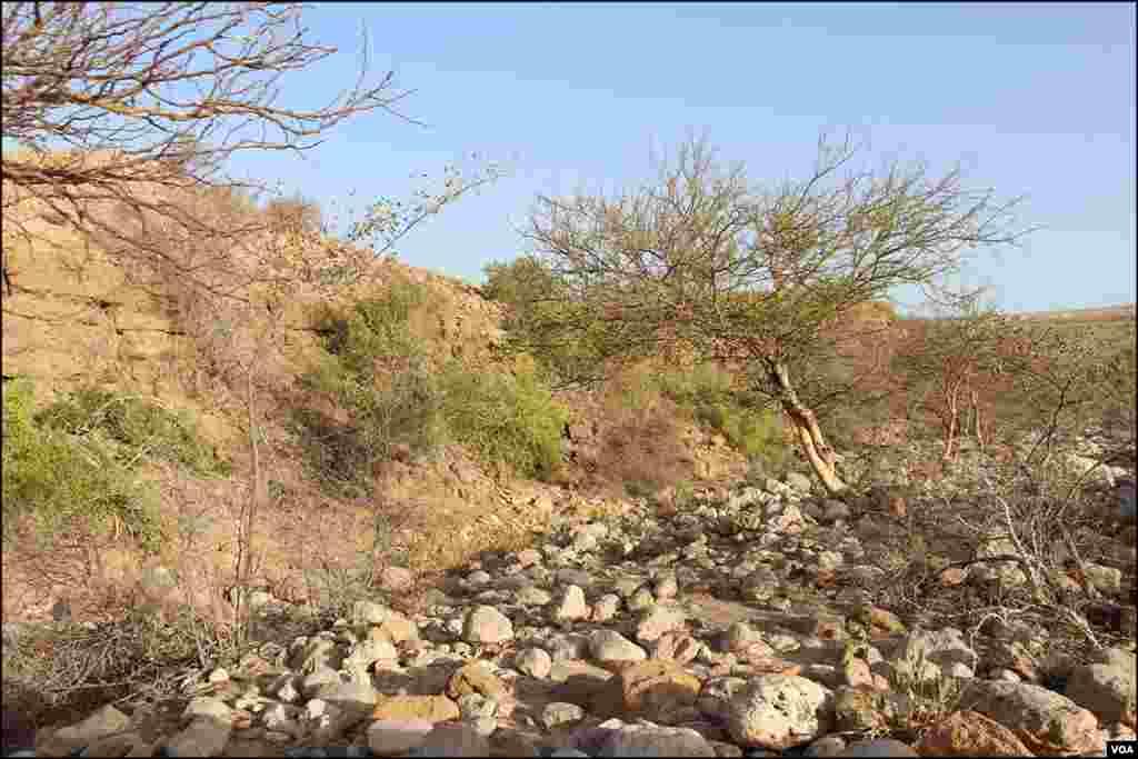 اس پارک کی خصوصیت یہ ہے کہ یہاں نایاب جنگلی حیات پائی جاتی ہے، جن کا پہاڑوں کے بیچ بسیرا ہے
