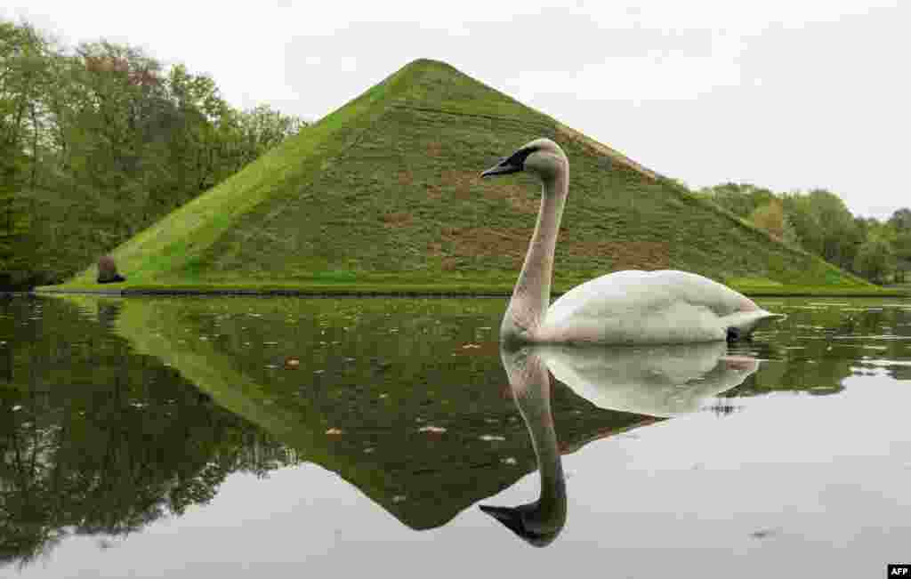"""A swan swims past the """"Seepyramide"""" (Lake Pyramid) at the Fuerst-Pueckler-Park in Branitz near Cottbus, eastern Germany. Count Hermann Ludwig Heinrich von Pueckler-Muskau (1785–1871), a German nobleman who is known for his passion for landscape gardening, is buried inside the interior of the pyramid."""