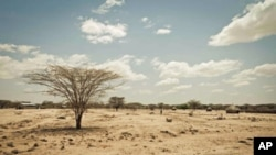 Kenya's Turkana region shows effects of severe drought affecting Horn of Africa (file photo)
