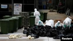 지난 6월 홍콩의 도매시장에서 보건 관계자들이 가금류를 살처분하고 있다.