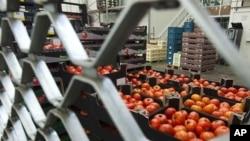 部分蔬菜因被疑为大肠杆菌感染源而遭禁