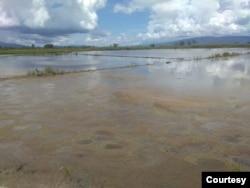 Areal persawahan di desa Meko yang terendam air luapan danau Poso sehingga tidak bisa diolah petani sejak Juli 2020. Jumat (6 November 2020) Foto : I Gede Sukaartana