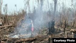 Pembabatan hutan dan pembukaan lahan di Indonesia. (Foto: Dok)