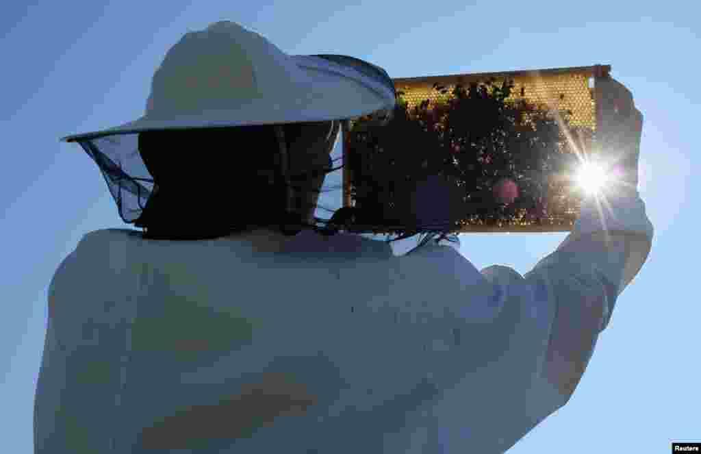 شہد کی مکھیوں سے بچنے کے لیے ماسک استعمال کیا جاتا ہے۔