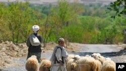 واشنگتن پست: 'جنگ خانواده های افغان را ازهم می پاشد.'