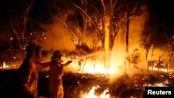 2013年9月10日悉尼附近: 消防队员在温莎唐斯自然保护区试图扑灭林火