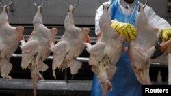 남아공, 닭고기 수입세 인상 논란