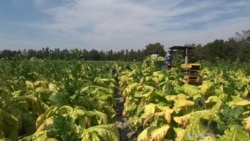 US Farmers Back Immigration Reform
