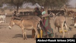 Un âne au Niger, le 8 mars 2019. (VOA/Abdoul-Razak Idrissa)