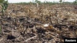 Efeitos da seca (foto de arquivo)